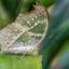 vlinders ad vliet
