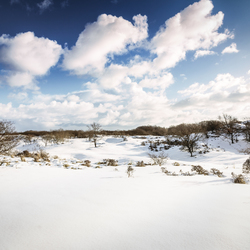 Winter duinen