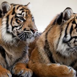 Zusjes 2 bij Burgers' Zoo