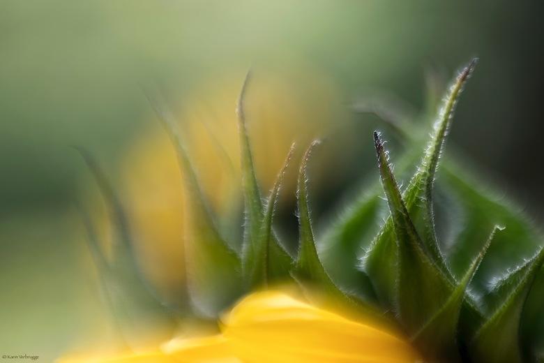 Abstracte zonnebloem