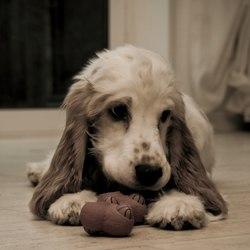 Onze hond met speelgoed bot