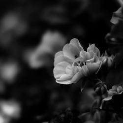 Reflectie bloem