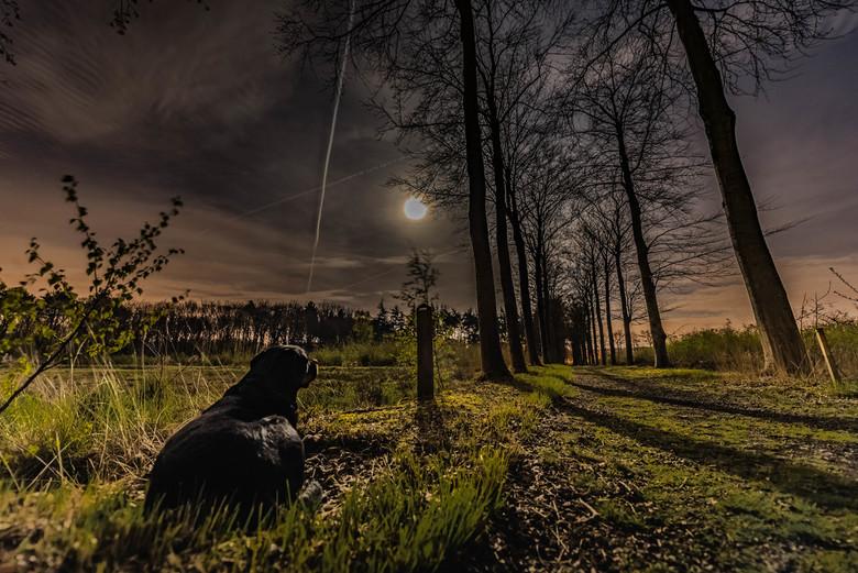 Sunshine in the moonlight - Volle maan van het maand April, mijn liefste schat die geniet van de warme lende nacht en de prachtige zicht op de volle m