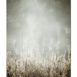 Bamboestoom