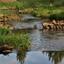 waterloopje