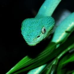 Mooi blauw/groen is niet lelijk