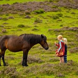 Meisjes bij een paard op de Posbank