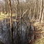 Mangrovebos in Den Helder?