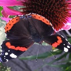 Tegengekomen in een tuincentrum! Foto met IPhone gemaakt.