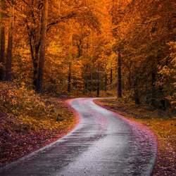 Slingerend door de herfst