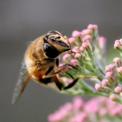 Insect op bloemetje