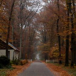 Herfst in de Graven Allee 3 onbewerkt