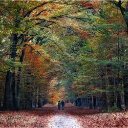 Liefde is! fotograferen in de herfst