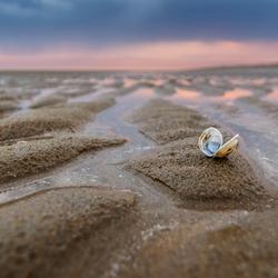 Sea Shells Sanctuary