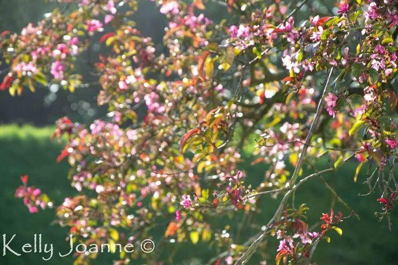Spring  - IMG_10679784995913.jpeg