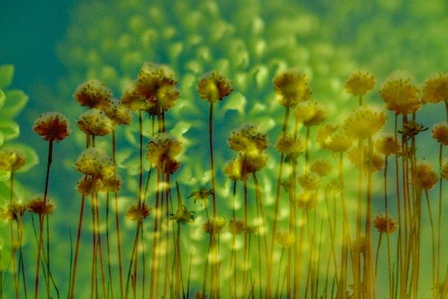 Dubbele bloemen -