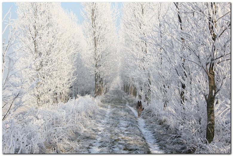 prachtig dijkje - nog steeds winter