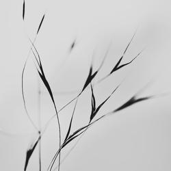 beweging - minimalisme