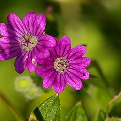 Wildflower 9.jpg
