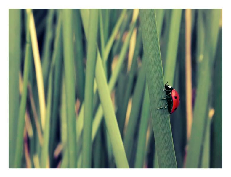 Lovebug - Gemaakt met een Canon EOS 500D<br /> Datum: 29 juni 2011<br /> Locatie: Harlingen