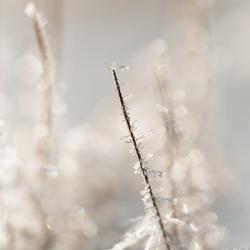 winter met ijskristal