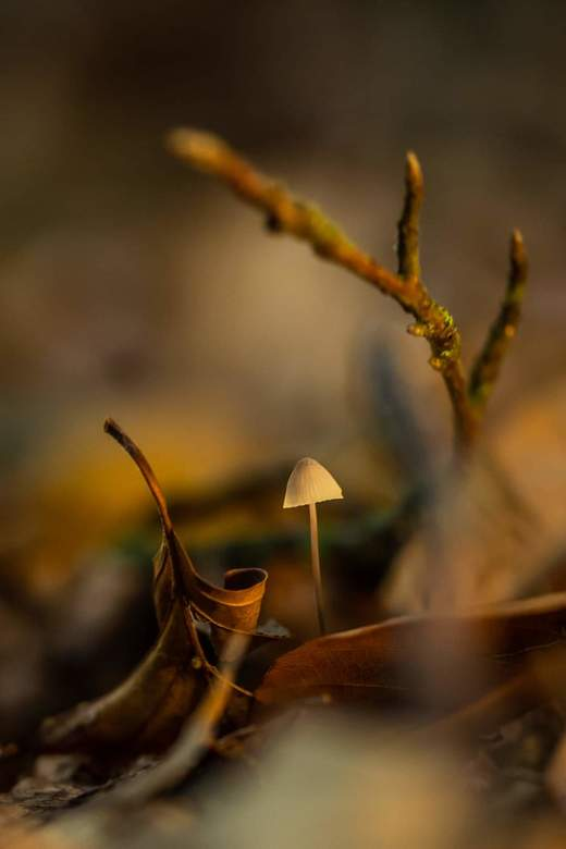 Herfst paddenstoelen  - Herfst in het waterloopbos