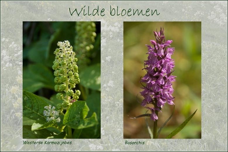 paarse bloemen akker