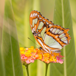 Vlinder in Blijdorp Amazonica