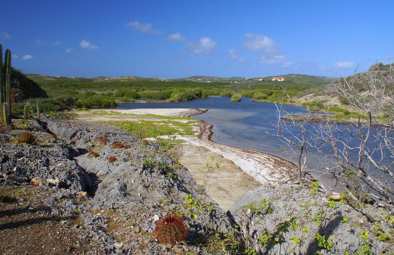 Banda Bau - Tijdens een wandeling bij een zeearm met schildpadden aan de noordkust van Banda Bau op Curaçao.