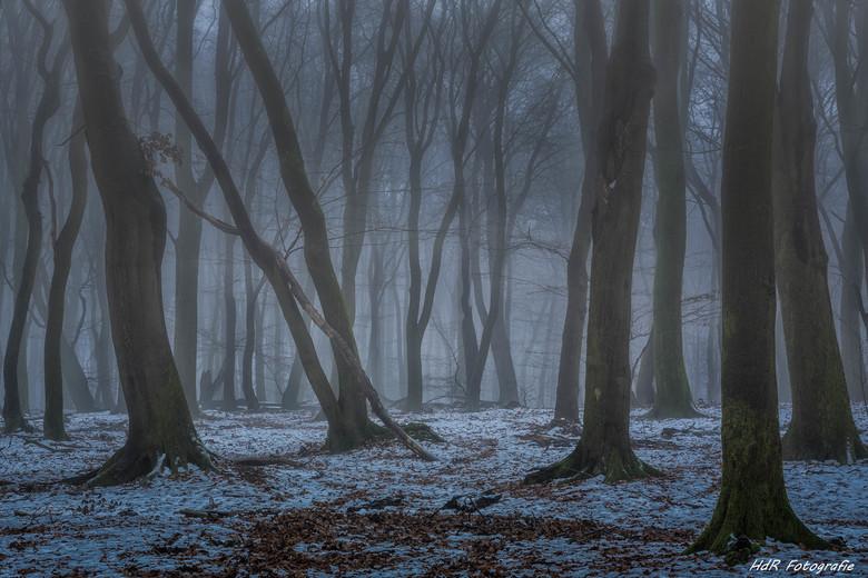 In het midden van het oudste bos van Nederland