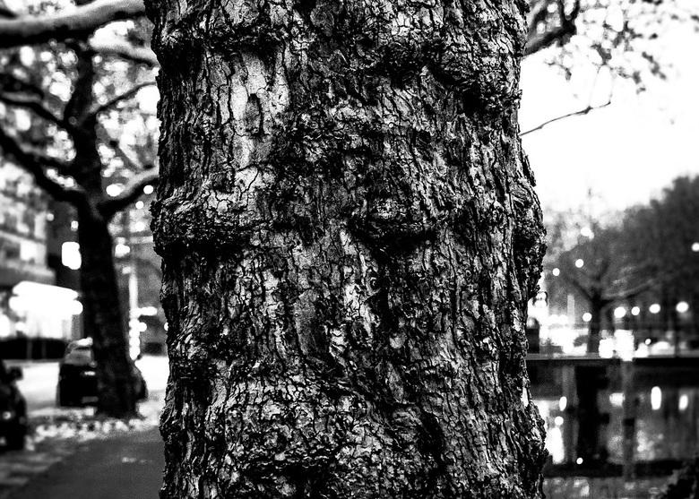 De boom. -