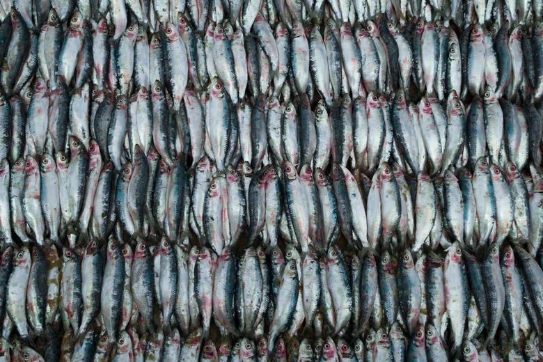 Fresh fish - Vismarkt in Sri Lanka!