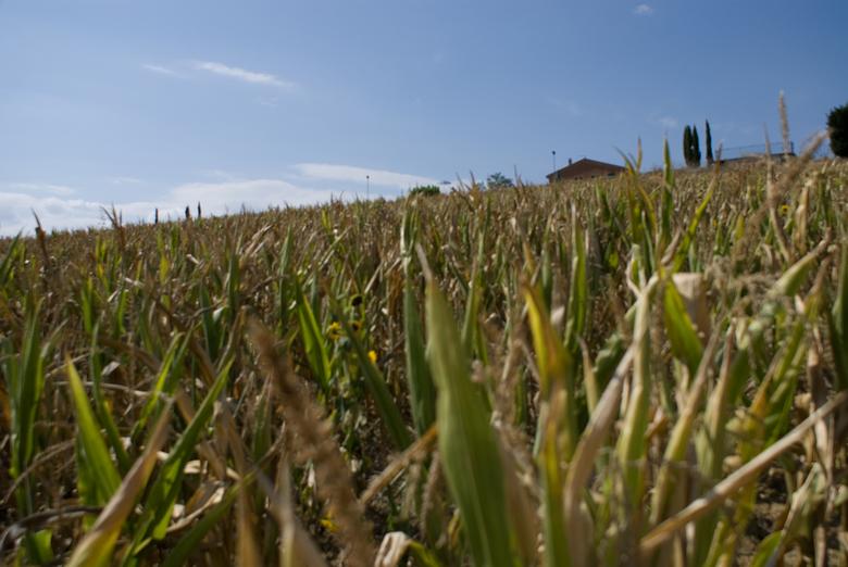 Up that hill - Ons huis/appartement lag boven op de heuvel. Ik ben naar beneden gelopen en net boven het gewas naar boven gekeken.