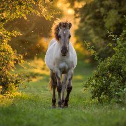 Wildhorse