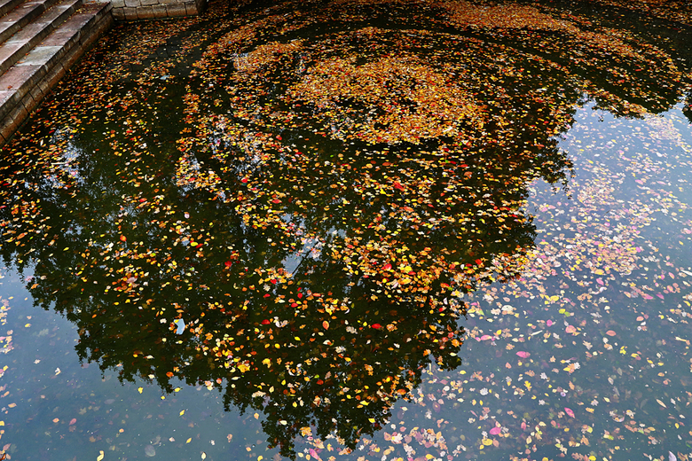 Herfstkleuren op het water - Afgevallen blaadjes in prachtige herfsttinten hebben zich verzameld op het wateroppervlak.<br /> In het water zie je de