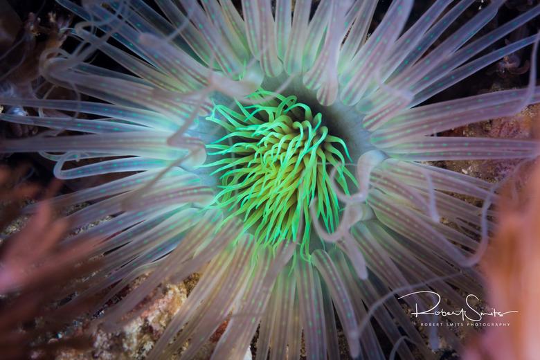 Kleurpracht onderwater - anemoon met minimale editing!