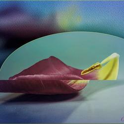 spelen met een tulpenblad.............