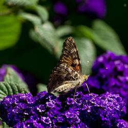 Paarse bloem met vlinder