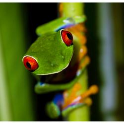 Groeten uit Costa Rica