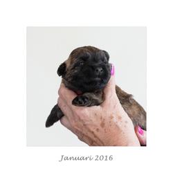 Januari 2016