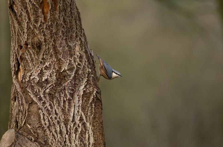 structuren - dagje vogelhut..wat geniet ik toch altijd van al het gefladder en de gedragingen van de gevleugelde diertjes<br /> dit is de welbekende