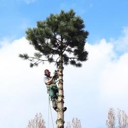 Bomen zagen