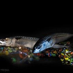 Stillevend met vissen