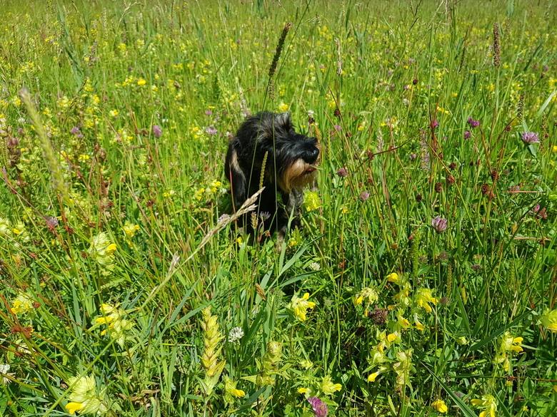 Heerlijk genieten van de zomer - Genietend in het grasveld, summertime!