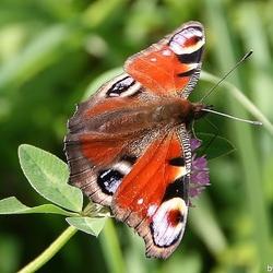 Vlinder in al zijn pracht