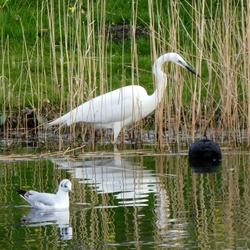3 watervogels