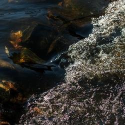 Herfstbladeren in het water.