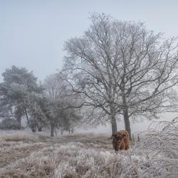 Galloway in de mist