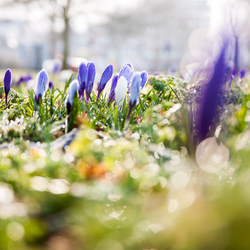 The advent of Spring