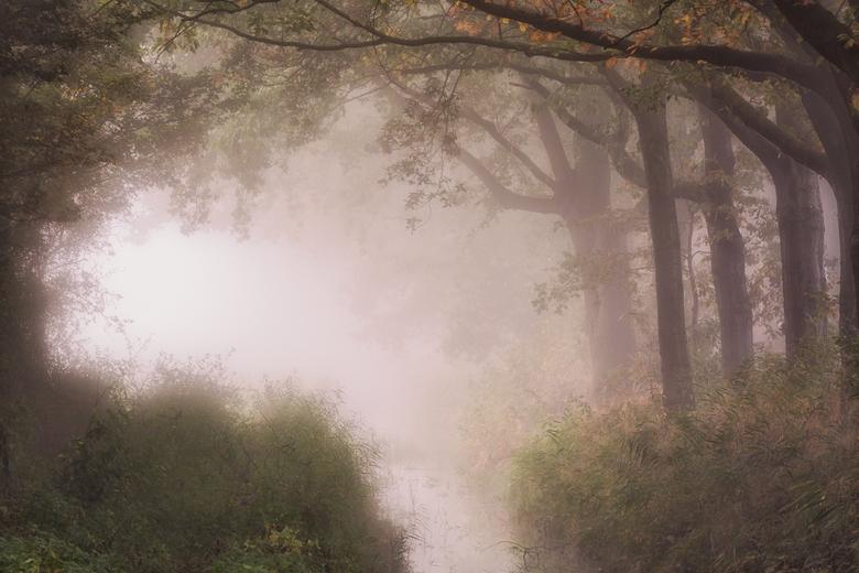 Visdonk op een mistige ochtendd